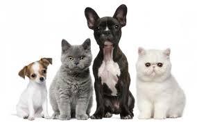 Pies I Kot W Domu Jak Oswoić Kota Z Psem Gardenpet Blog